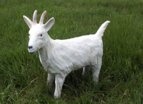 Life Size white female model goat