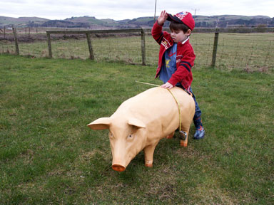 Sow Pig Model