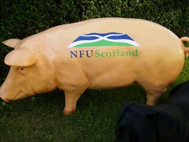 3D Life Size NFU Sow Pig Model