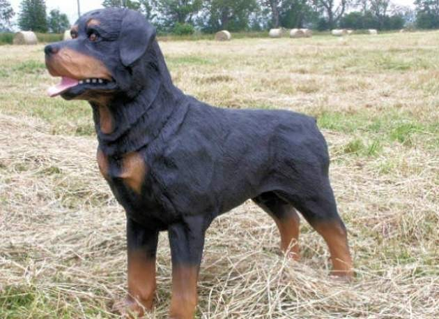 Life Size Model Rottweiler Dog