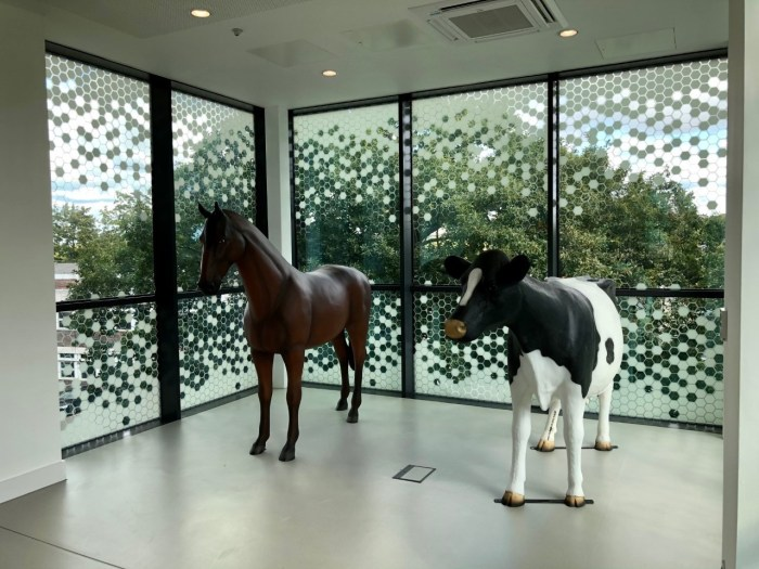 Life Size 3D Horse Model and Cow Model at Harper & Keele University