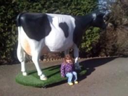 Model Milking Cow on Turfboard
