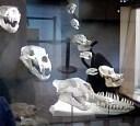 Fox skull! Beaver skull! Interesting, though a bit morbid for some.