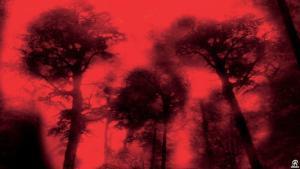 Cabin Fever 2002 Pandemic Film