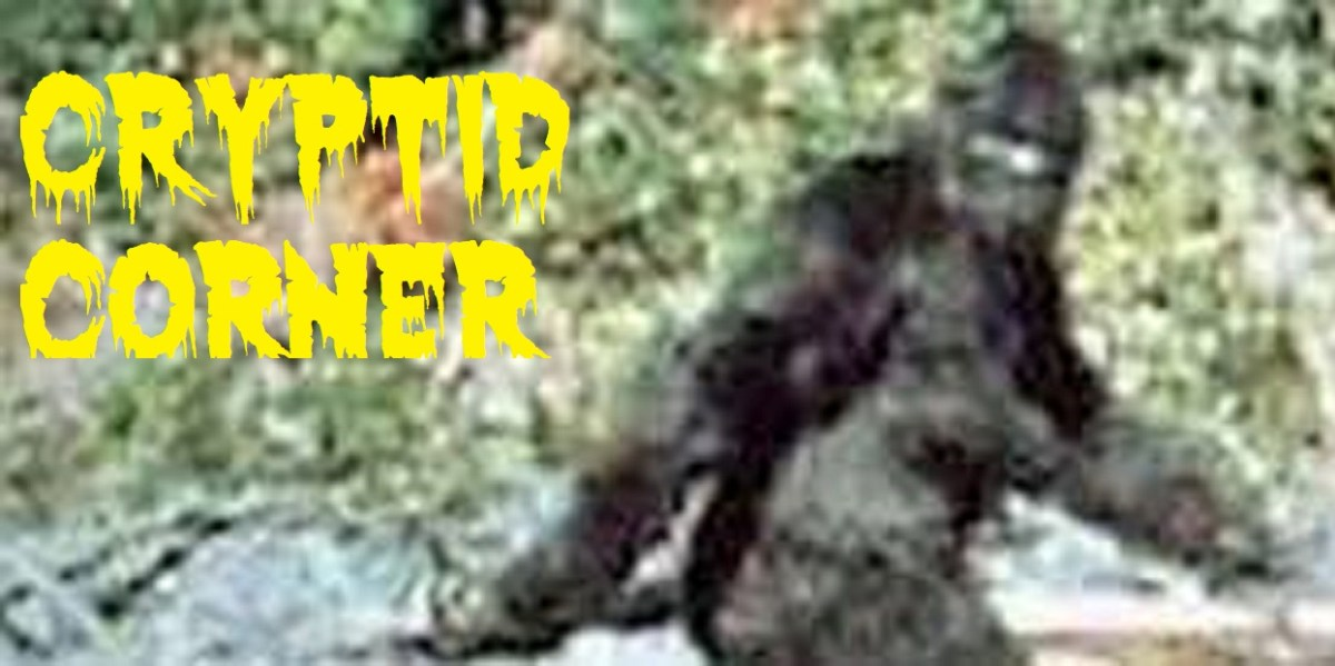 Cryptid Corner: Possible Sasquatch Howls Recorded at Camp!