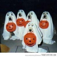 dog costumes | Horror Virgin
