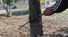 الأشجار المثمرة مهرب سكان ريف حمص من برد الشتاء