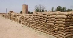 عجز في محصول القمح يدفع حكومة الأسد لرفع سعر الاستلام من الفلاحين