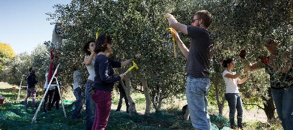 olive(v)s