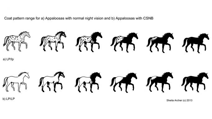Genome Sequencing in Horses and Solutions for Genetic
