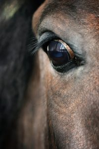 Not Getting The Horse Behavior Expected?