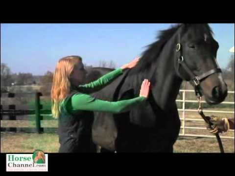 Body scoring: is your horse in good shape?