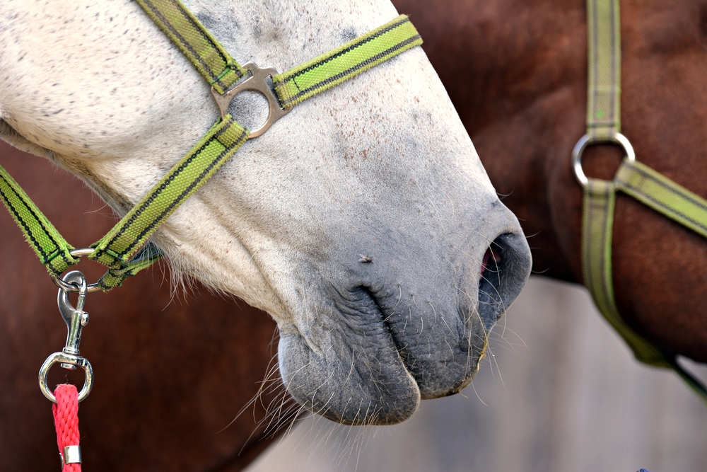 South African Army horses neglected – yet again