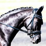 Color Your World Black Horseaddict