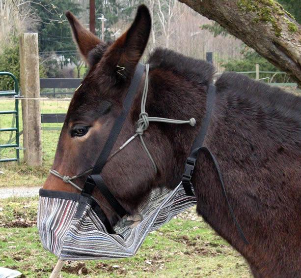 Pack Saddles  Accessories Hobbles Panniers Top Packs