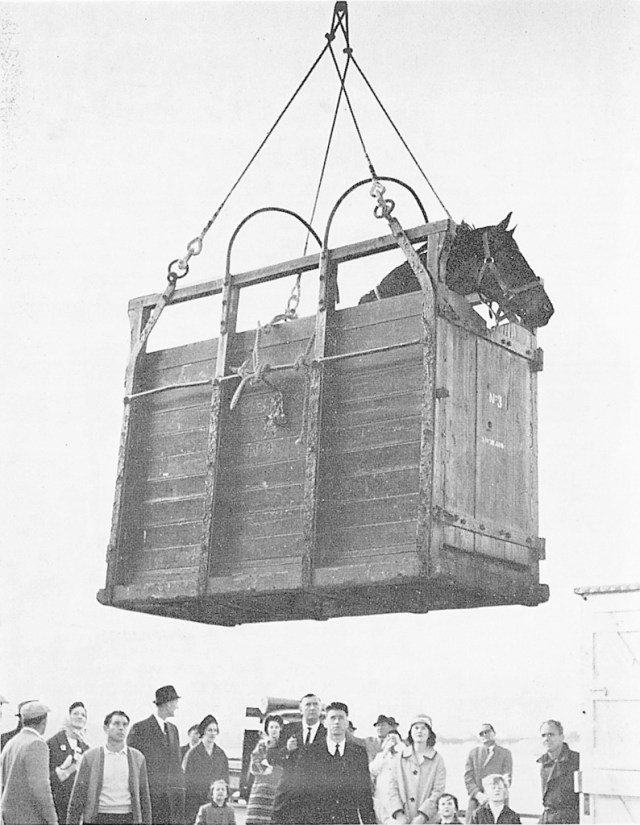 Saba Sam gets a rousing send-off as he is hoisted about the Port Montreal for the long journey to Tokyo (NZHP Library)