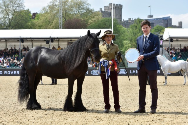 Murthwaite Dawn Chorus Fell pony owned by HMQ reserve champion in the M&M classes