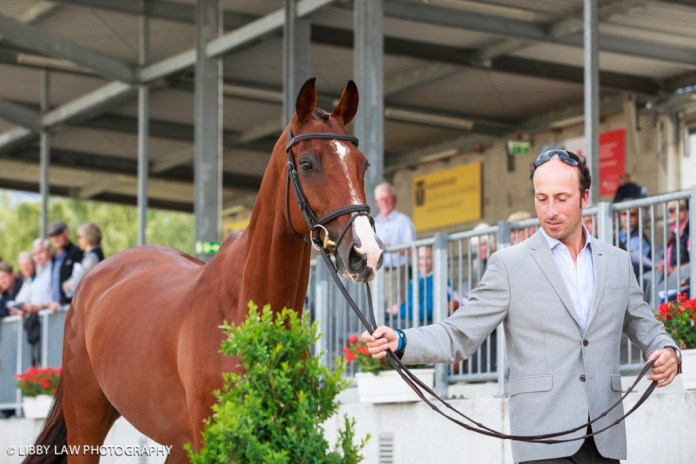RIngwood Skyboy looks good for Tim Price at the first horse inspection. (Image: Libby Law)