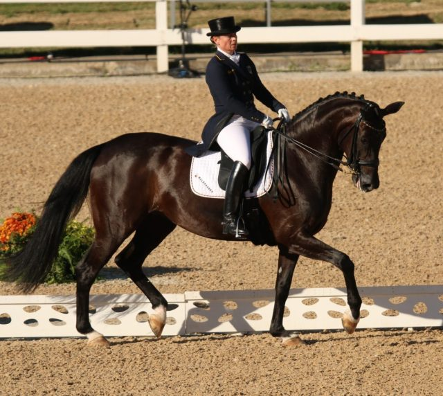 Isabell Werth on Wihegold Old