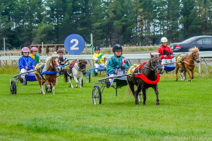 Some cute ponies in this race! (Image: Harness Racing NZ)