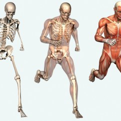 Human Skeleton And Muscles Diagram Open Source Database Tool Picture Of Body Horseandridertherapy Com Au