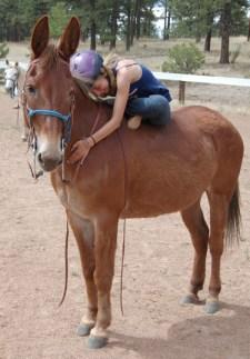 HorseYoga2