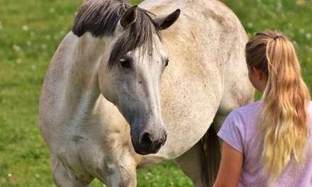 Hesteforståelse er noget du skal ville