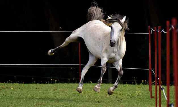 Det gode foldophold: Aktiviteter for heste på fold
