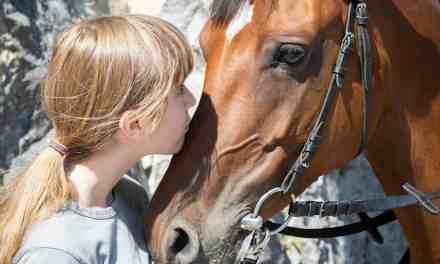 Tøjlehalt hest. Rygsmerter, tandproblemer, forkert bid eller for hård hånd?