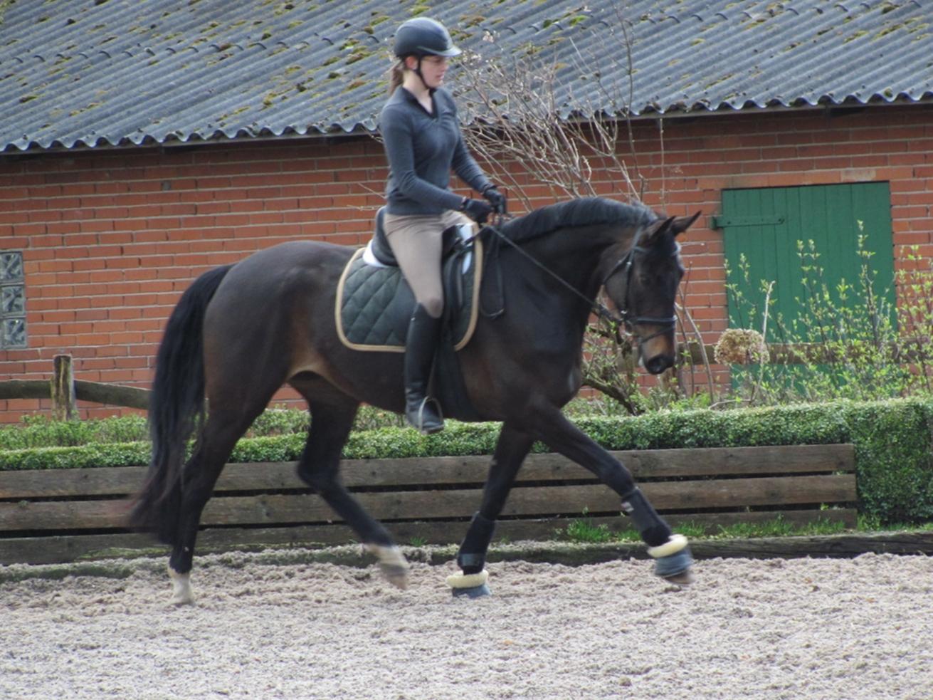 junge pferde reiten ist was schönes  horse diaries