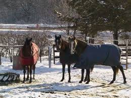 February 2014 Horse Facts By Marsha Hubler