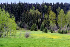 Walters Ranch Moffat Creek Acreage 765 Acres - Horsefly, BC