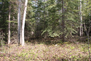 2 acres in the forest