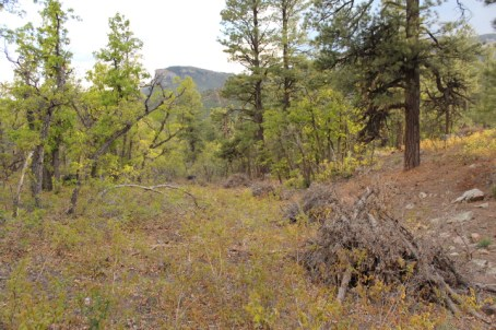 Slash piles at Dalla Mountain Park.
