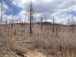 This forest atop Missionary Ridge was nuked in the Missionary Ridge Fire.
