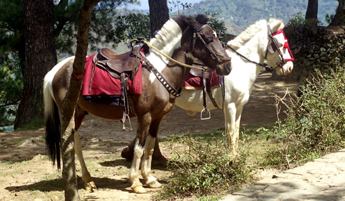 Baguio Light Horse and Baguio Pony