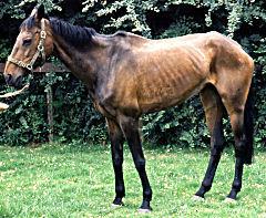 Equine Grass Sickness AKA Equine Dysautonomia