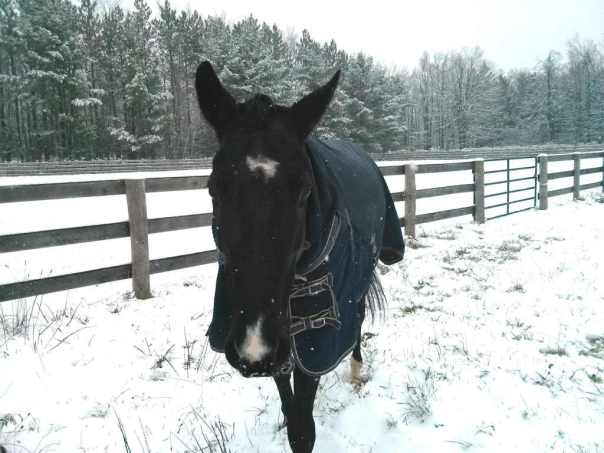 horse keeping winter