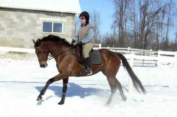 A calm, relaxed canter in snow!