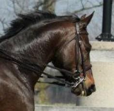 short reins