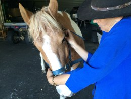 Horse Muscle Care Treatment