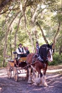 central florida wedding horse carriage service