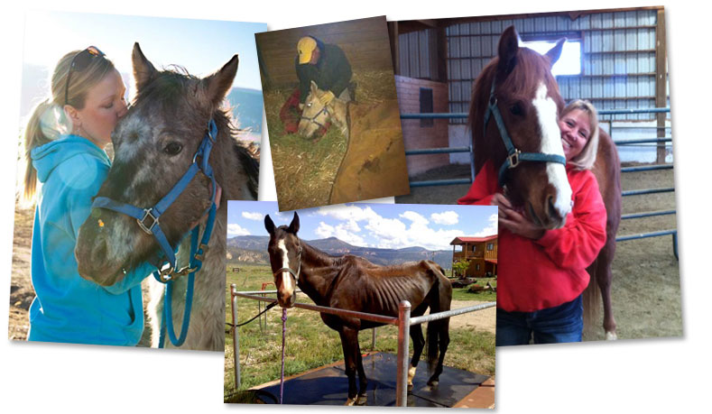 Donate Now to Horse Rescue in Utah