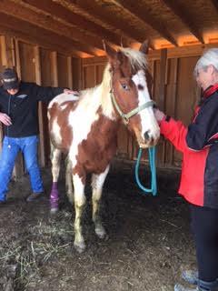 Animal Cruelty - Dust Devil Ranch Sanctuary for Horses