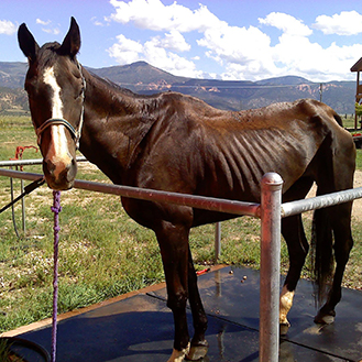 Dust Devil Ranch Sanctuary for Horses