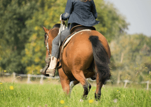 9d3ca9fdba742 Baby On Board: Your Guide to Horse Riding While Pregnant