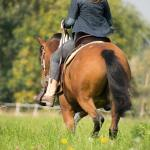 Horseback Riding What To Wear With Pictures