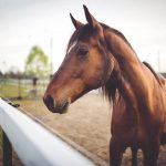 Say Yes To The Horse 11 Best Breeds For First Time Horse Owners