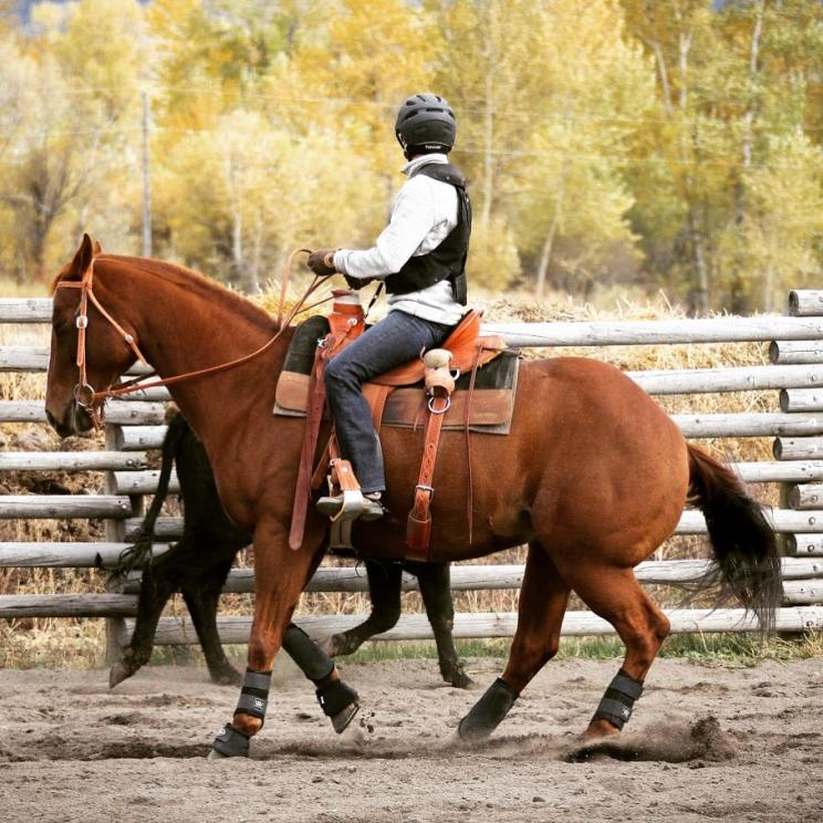 Equestrian Hit Air Vest Review: My Favorite Fall in 30 Yrs