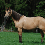 Keep Calm Ride On Meet The 5 Calmest Horse Breeds